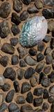 Arte do jardim - olmo Shell e rochas do rio fotografia de stock