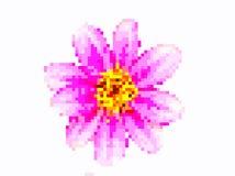 Arte do pixel da flor Fotos de Stock
