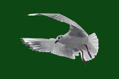 Arte do polígono do pássaro do pombo Fotografia de Stock