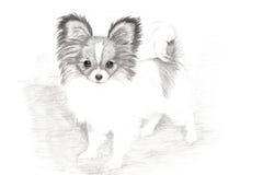 Arte drenado mano adorable del perrito de Papillon Foto de archivo libre de regalías