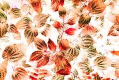 Arte ed estratto tropicali della foglia Fotografie Stock Libere da Diritti