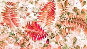 Arte ed estratto tropicali della foglia Immagini Stock