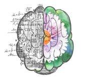 Arte finala dos usos dos hemisférios do cérebro ilustração stock