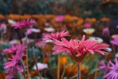 Arte floral Fotos de Stock