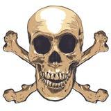 Arte humana do vetor do crânio Ilustração desenhada mão Fotografia de Stock Royalty Free