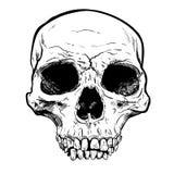 Arte humana do vetor do crânio Ilustração desenhada mão Imagem de Stock