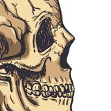 Arte humana do vetor do crânio Ilustração desenhada mão Foto de Stock