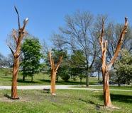 Arte inoperante da árvore Fotos de Stock