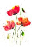 Arte moderna de flores da papoila, ilustrador da aquarela Fotografia de Stock Royalty Free