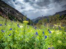 Arte nativo del Wildflower de Colorado Fotos de archivo