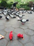 Arte Nueva York de la paloma Imagenes de archivo