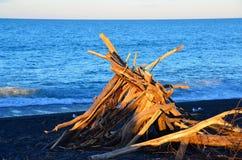 Arte Nuova Zelanda della spiaggia del legname galleggiante immagini stock libere da diritti