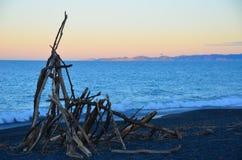 Arte Nuova Zelanda della spiaggia del legname galleggiante fotografia stock