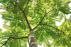 Arte pop verde de Asia de la naturaleza del árbol fotos de archivo