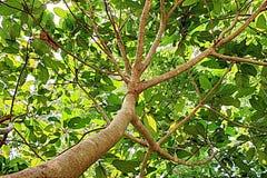 Arte pop verde de Asia de la naturaleza del árbol Foto de archivo