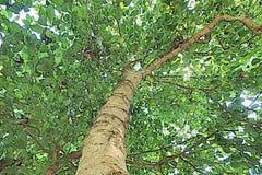 Arte pop verde de Asia de la naturaleza del árbol Imagen de archivo