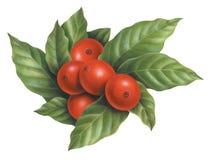 Arte sin procesar de los granos de café Foto de archivo libre de regalías