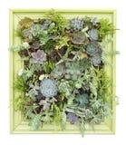 Arte succulente verticale della parete Fotografie Stock Libere da Diritti