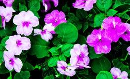 Arte y flores púrpuras de tierra negras Imagen de archivo