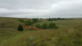 Artemísia e árvores contra blefes vermelhos da sujeira Imagens de Stock Royalty Free