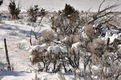 Artemisa en nieve Imagen de archivo libre de regalías