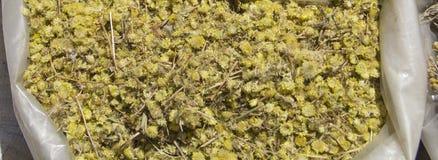 Artemisia absinthium zdjęcia royalty free