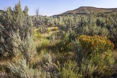 Artemisia e fiori gialli fotografie stock