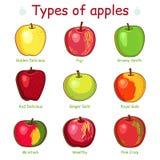 Arten von Äpfeln Stockfoto