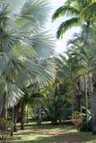 Arten von Palmen stockbilder