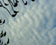 Arten von Wolken Lizenzfreies Stockfoto