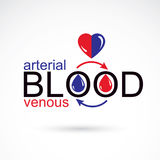 Arterial and venous blood conceptual illustration, blood circula Stock Image