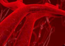 Arterias de la sangre venas Foto de archivo