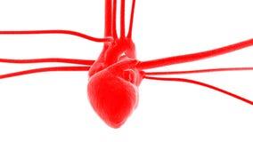 arterii serca żyły Obraz Stock