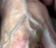Artery Stock Image