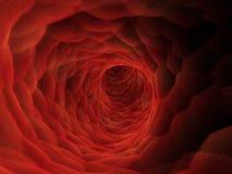 Artery Stock Photos