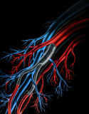 Artery - Teflon Arterial Grafts Stock Photo