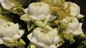 Artes, adoración blanca de Lotus And Fresh Flowers For Buda imagenes de archivo
