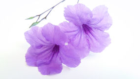 Artes da flor da beleza Imagens de Stock