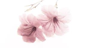 Artes da flor da beleza Imagens de Stock Royalty Free