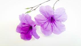 Artes de la flor de la belleza Fotografía de archivo libre de regalías