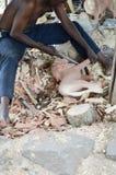 Artesano del Kenyan que talla dos leones Imágenes de archivo libres de regalías