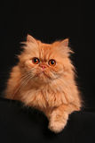 Artful cat Royalty Free Stock Images