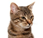 Artful cat on white Royalty Free Stock Images