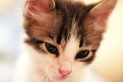 Artful kitten Stock Images