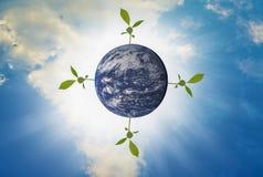 Arth, τέσσερα δέντρα που αυξάνεται στην κορυφή, με το φωτεινό ουρανό ως υπόβαθρο Στοκ Εικόνες
