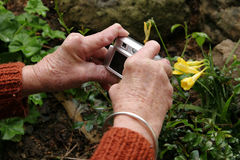 Arthritic hands holding digital camera. Senior woman with rheumatoid arthritis taking a photo of a flower in the garden Royalty Free Stock Photos