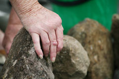 Arthritic hands moving rocks. Living with pain series. Senior woman's hand knotted with rhuematoid arthritis moving rocks in the garden royalty free stock image