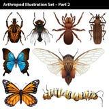 Arthropods Royalty Free Stock Photos