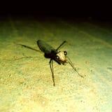 Arthropods. At road .. beautiful black eyes stock photo
