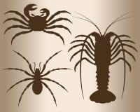 Arthropods. Stock Image